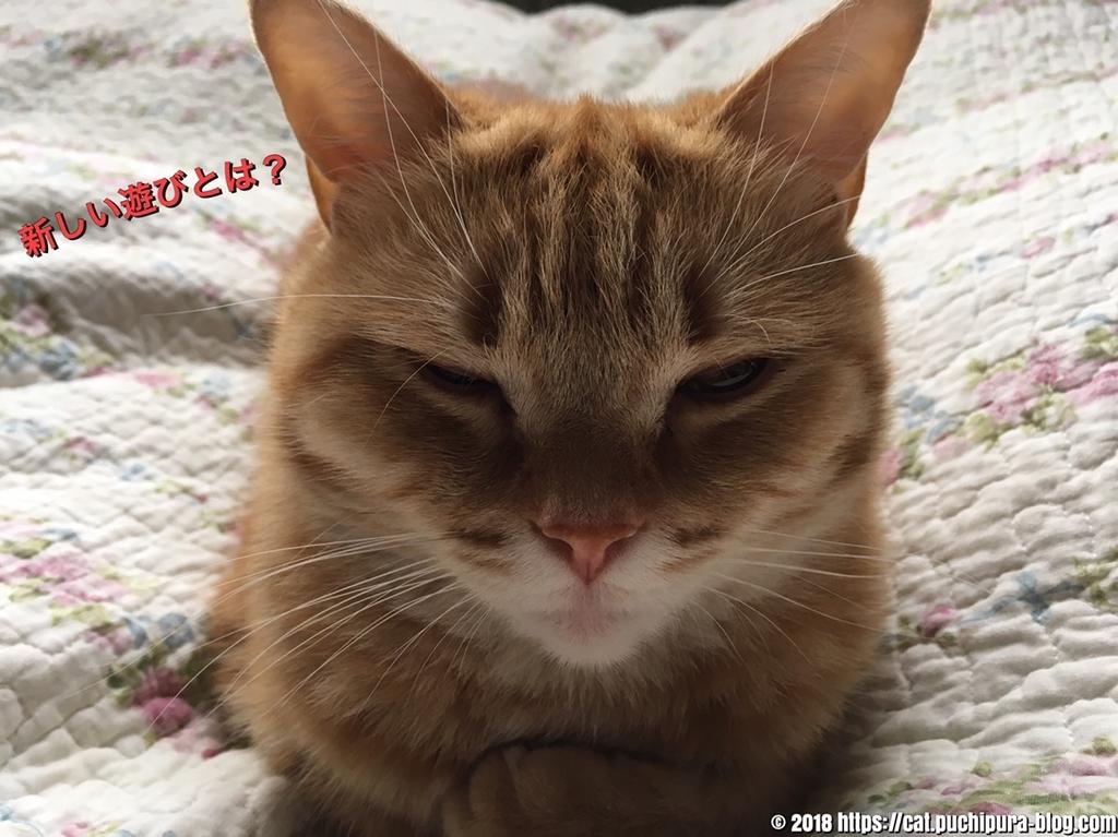 f:id:hitsuji-puchi:20181223124819j:plain