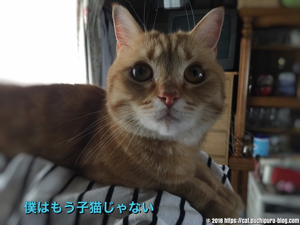 f:id:hitsuji-puchi:20181223124841j:plain