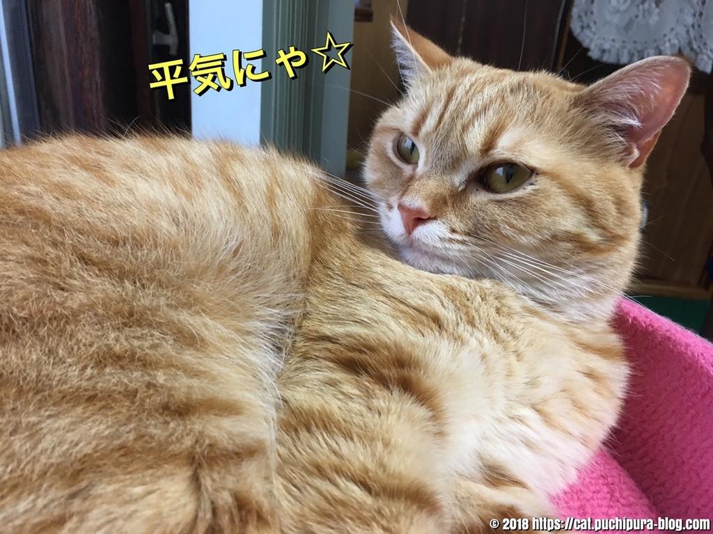 f:id:hitsuji-puchi:20181223125032j:plain