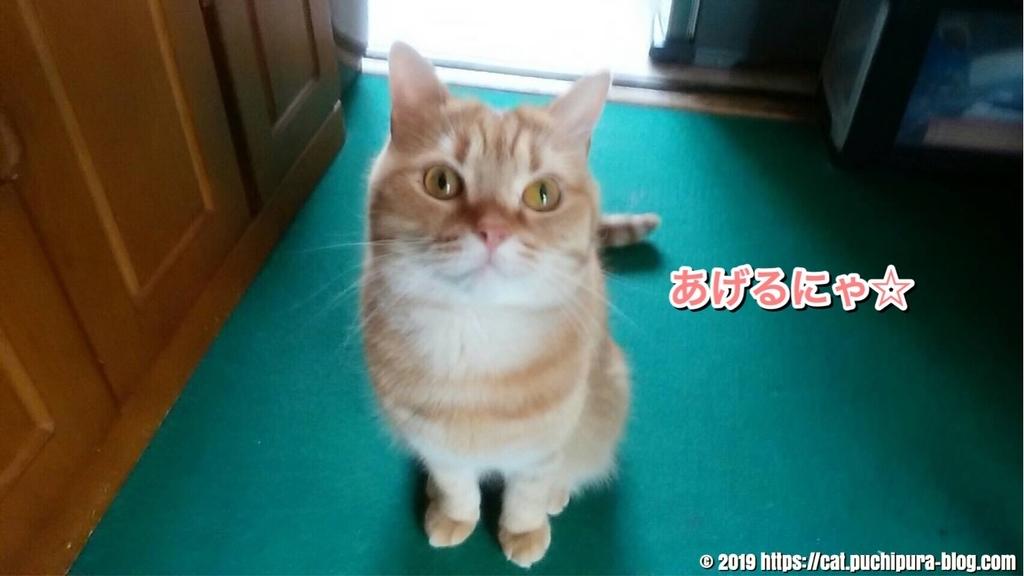f:id:hitsuji-puchi:20190109061030j:plain