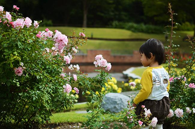 f:id:hitsujinoikuji:20170920230134j:plain