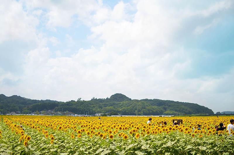 f:id:hitsujinoikuji:20190824012057j:plain