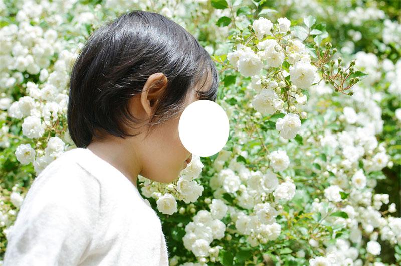 f:id:hitsujinoikuji:20200123212456j:plain