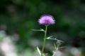 [植物][花]201805007