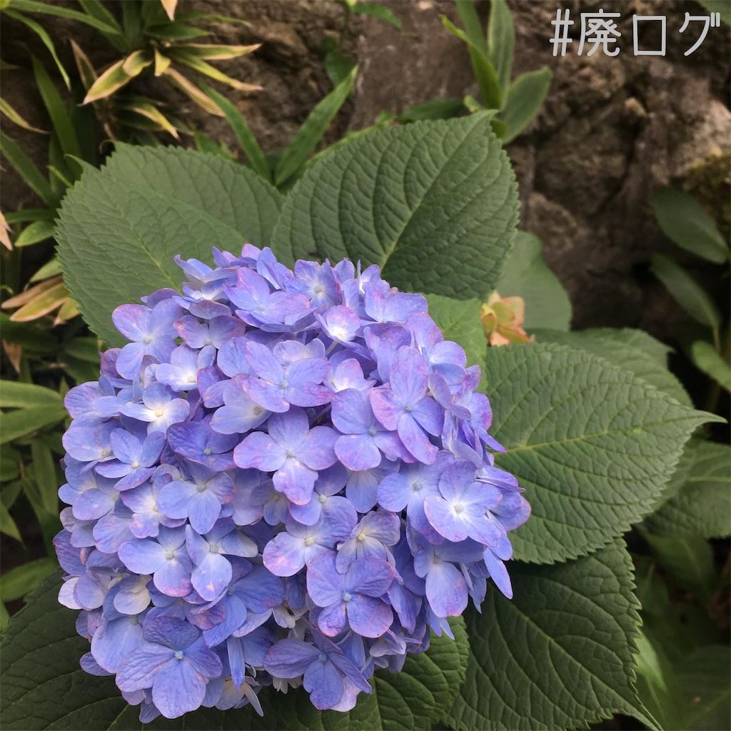 f:id:hiyapa:20190728185924j:image