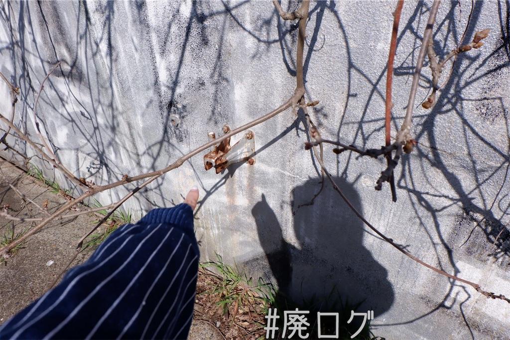 f:id:hiyapa:20200401200324j:image