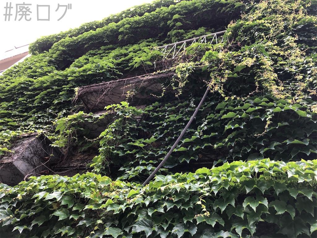 f:id:hiyapa:20200615232356j:image