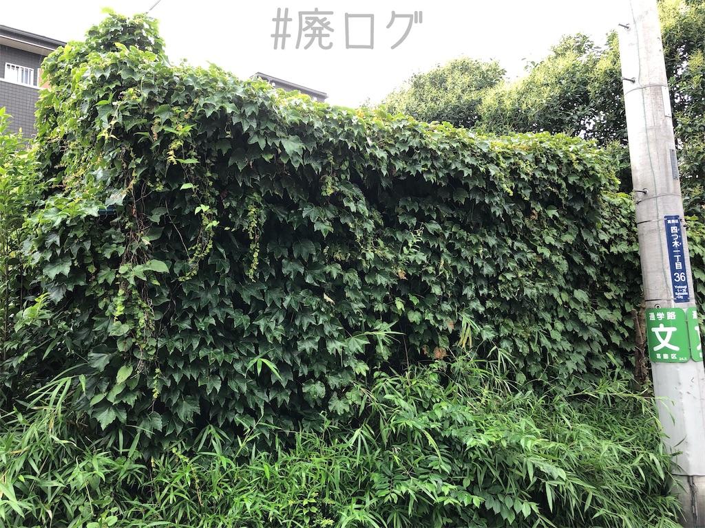 f:id:hiyapa:20200731214924j:image
