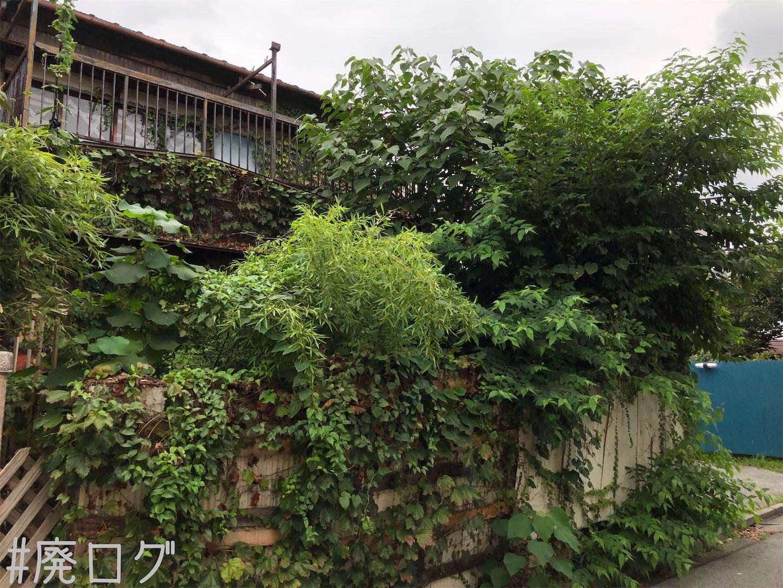 f:id:hiyapa:20201023113841j:image