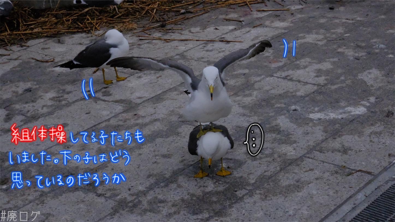 f:id:hiyapa:20210605235600j:image