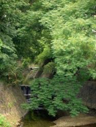 f:id:hiyohiyodori:20110809105051j:image