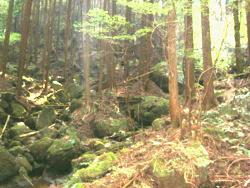 f:id:hiyohiyodori:20111009125823j:image