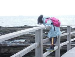 f:id:hiyohiyodori:20120123104328j:image