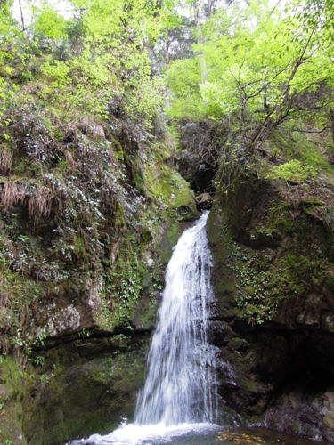 f:id:hiyohiyodori:20120512134739j:image:w360