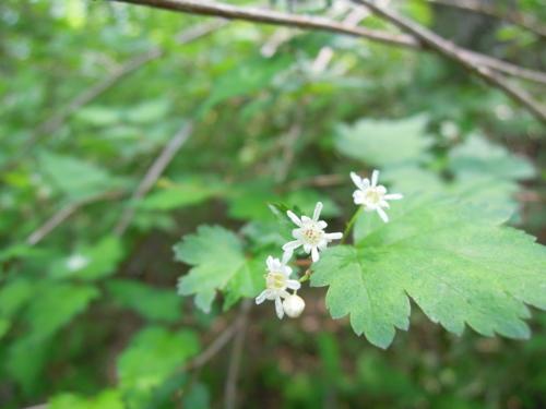 f:id:hiyohiyodori:20120528112105j:image