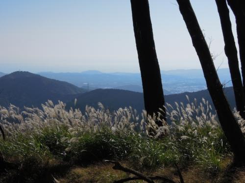 f:id:hiyohiyodori:20121021125859j:image
