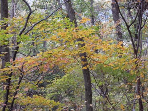 f:id:hiyohiyodori:20121111114122j:image