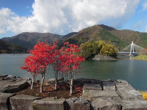 f:id:hiyohiyodori:20121118123845j:image