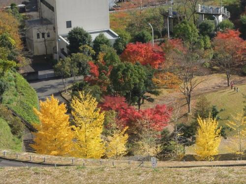 f:id:hiyohiyodori:20121118124000j:image