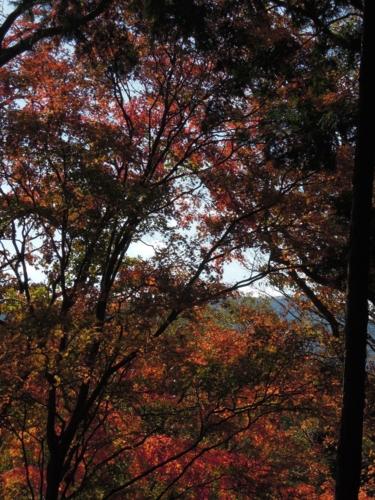 f:id:hiyohiyodori:20121125103325j:image