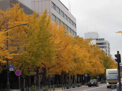 f:id:hiyohiyodori:20121128104711j:image