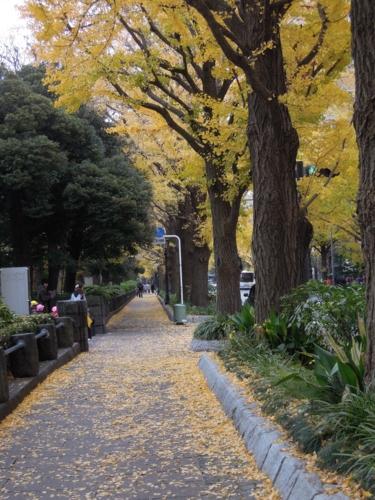 f:id:hiyohiyodori:20121128113605j:image