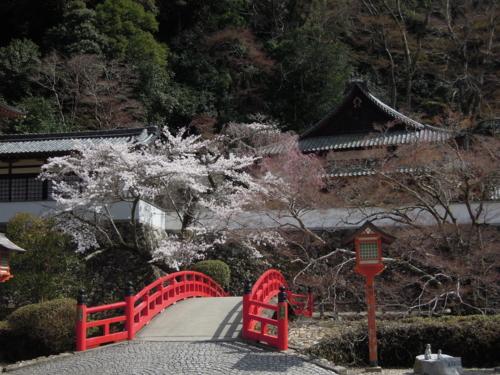 f:id:hiyohiyodori:20130401100010j:image