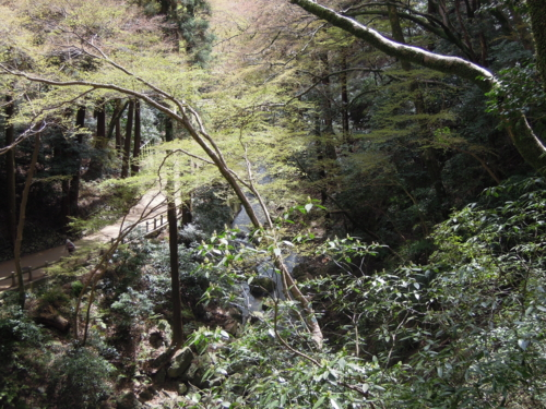 f:id:hiyohiyodori:20130401104901j:image