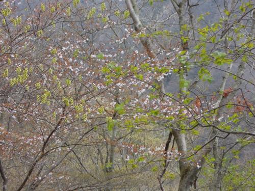 f:id:hiyohiyodori:20130413085522j:image