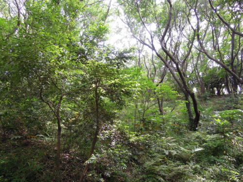 f:id:hiyohiyodori:20130519143422j:image