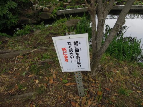 f:id:hiyohiyodori:20130519155850j:image