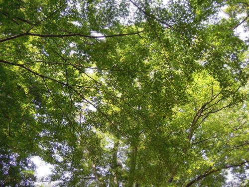 f:id:hiyohiyodori:20130815120000j:image