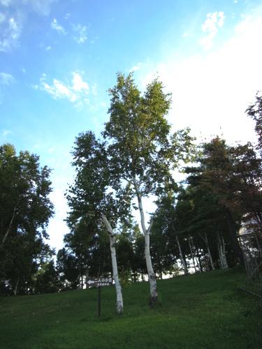 f:id:hiyohiyodori:20130826061003j:image