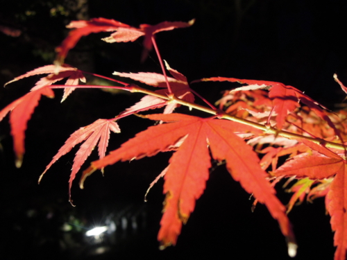 f:id:hiyohiyodori:20131124171750j:image