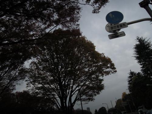 f:id:hiyohiyodori:20131125110033j:image