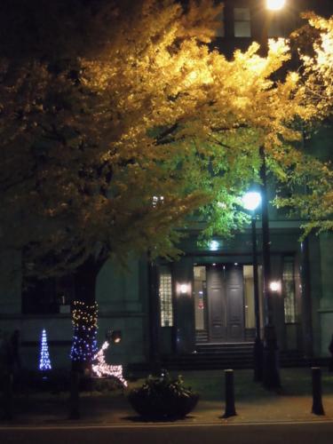 f:id:hiyohiyodori:20131201192013j:image