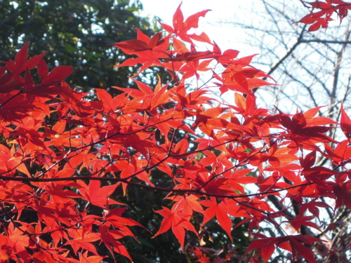 f:id:hiyohiyodori:20131205114100j:image