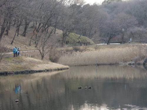 f:id:hiyohiyodori:20140113161144j:image