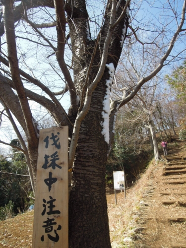 f:id:hiyohiyodori:20140207104528j:image
