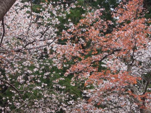f:id:hiyohiyodori:20140413135049j:image