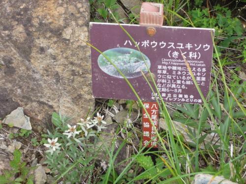 f:id:hiyohiyodori:20140807100044j:image