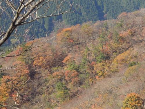 f:id:hiyohiyodori:20141104120843j:image