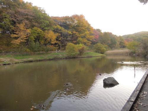 f:id:hiyohiyodori:20141123162038j:image