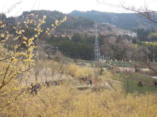 f:id:hiyohiyodori:20150207133908j:image