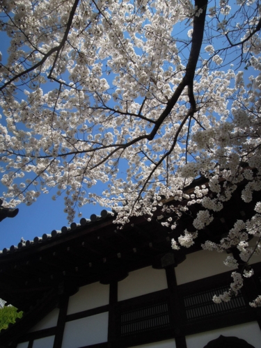 f:id:hiyohiyodori:20150402133715j:image