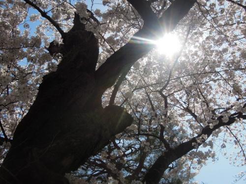 f:id:hiyohiyodori:20150402133729j:image
