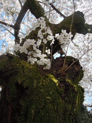 f:id:hiyohiyodori:20150402133844j:image
