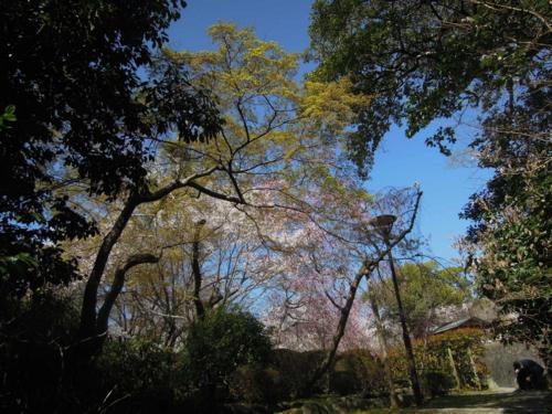 f:id:hiyohiyodori:20150402135322j:image