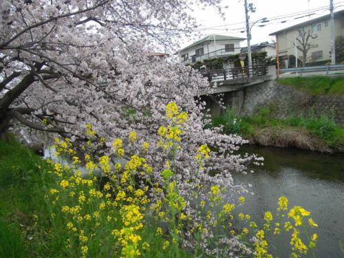 f:id:hiyohiyodori:20150403102108j:image