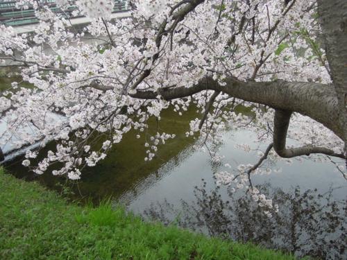 f:id:hiyohiyodori:20150403102157j:image